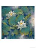 White Lotuses