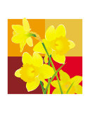 Daffodils - brown cube backdrop