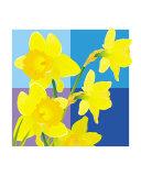 Daffodils - blue cube backdrop
