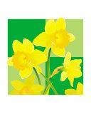 Daffodils - green cube backdrop