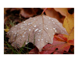 Perfect Raindrops