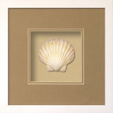 *Exclusive* Irish Deep Shell Shadowbox - Sand