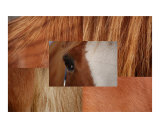 Horse Patterns