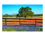 Flowers Fence and Oak 1