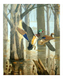 Wood Ducks Through Flooded Timber