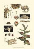 Nature's Curio III