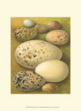 Bird Egg Collection I