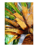 Palm Tree - Palm Painting Collection  Fairchild