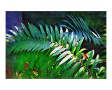 Cycads - Cycads Painting Collection  Fairchild