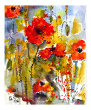 Poppies & Blue Sky