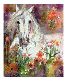 White Horse In Poppy Field