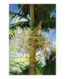 Palm Tree Palm Painting scenic landscape 32
