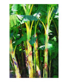 Banana - Banana Painting Collection  Scenic musa