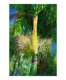 Palm Tree  Palm Painting Collection  Fairchild Tro