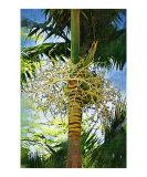 Palm Tree Palm Painting scenic landscape 28
