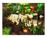 Tropical Orchid Orchid Painting Collection Scenic