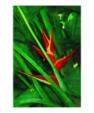 Tropical Heliconia Heliconia Painting Collection24