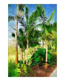 Palm Tree  Palm Painting Collection  Fairchild