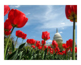 US Capitol Building Spring time no-1