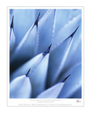 Blue Agave  Sedona Arizona
