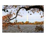 Washington Monument at Fall