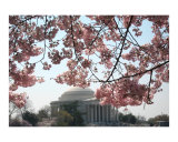 Cherry Blossom Jefferson Memorial no-30