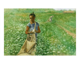 Girl in Cotton Field