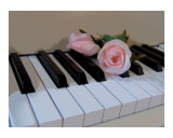 Petal Pink Keys