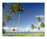 Palms on Taveuni
