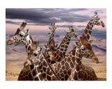 Giraffe Renioun