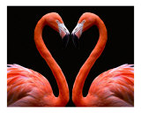 Kissing Flamingo Heart ( orange/pink )