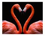 Kissing Flamingo Heart ( orange/pink )