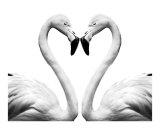 Kissing Flamingo Heart