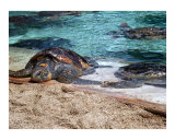 sea turtles laying in the sun