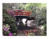 Japanese Dream Garden