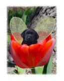 Fairy Dog Drake - black Labrador Retriever puppy
