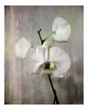 Orchid Silver