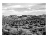 Joshua Tree Desertscape