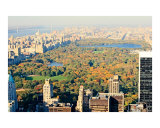 Fall in Central Park  Aerial View - New York
