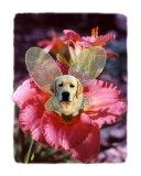 Fairy Dog Marius - Yellow Labrador Retriever