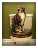 Proud king on its trone (cat on toilet seat)