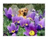 Fairy Dog Roo - Yellow Labrador Retriever
