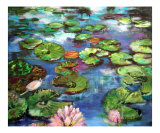 Lily Pond - Lotus Flower - Koi Pond