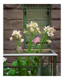 Flowers for a Brownstone