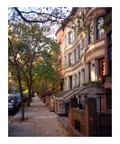 Trees and Brownstones Grow in Brooklyn