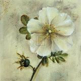 Floral Blush I