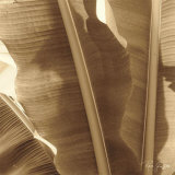 Banana Leaves I