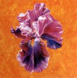 Un Amour d'Iris