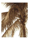 Palm Tree II