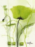 Coquelicot Vert II Reproduction d'art par Marthe